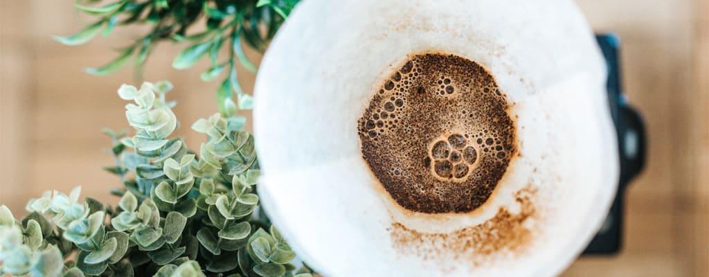 Extraction de café vu du dessus avec des plantes vertes autour