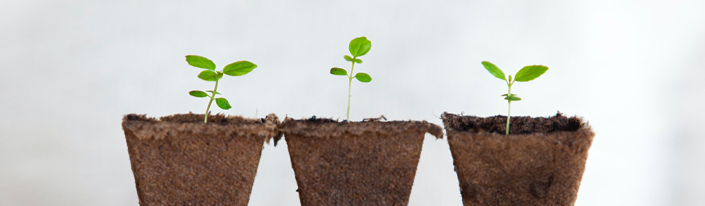 3 petites pousses de plante verte