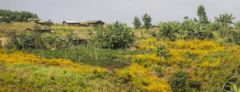 ethiopie-gamoji.jpg