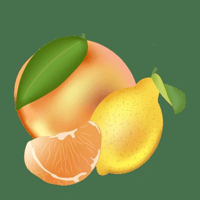 illustration d'agrumes : pamplemousse, citron et mandarine