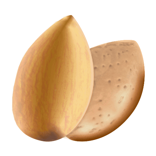 illustration d'une amande avec coque et d'une amande sans coque