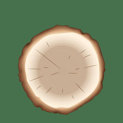 illustration d'un tronçon d'arbre