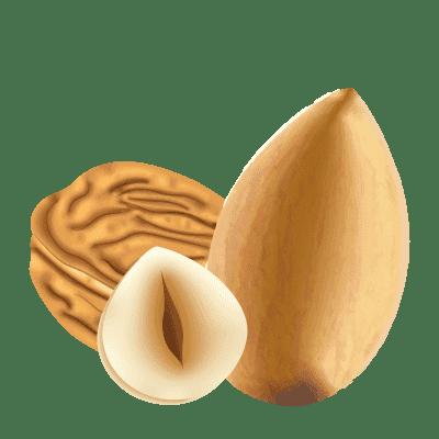 illustration de fruits à coque : amande, noisette et noix