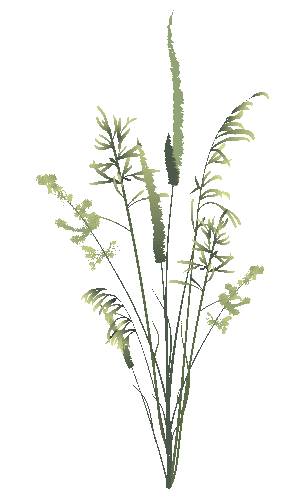 illustration d'herbes sauvages