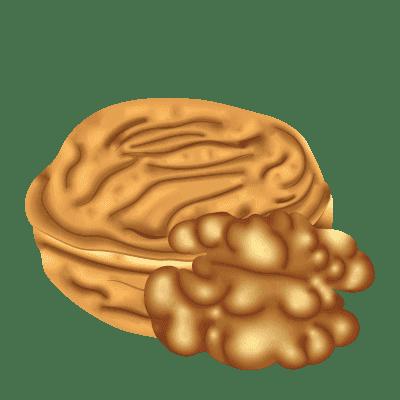 illustration d'une noix fermée et ouverte