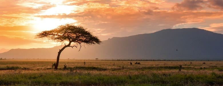 plaine-africa.jpg